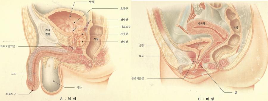 남여하부요로_1.jpg